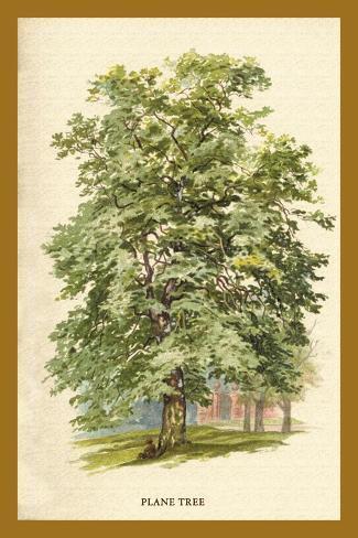 The Plane Tree Decalcomania da muro