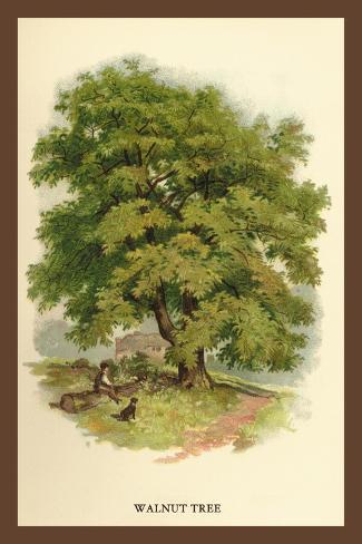 Walnut Tree Decalcomania da muro