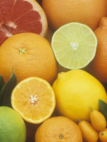 Citrus Fruits: Grapefruit, Lemon, Lime, Tangerine, Tangelo, Orange, Clementine and Kumquat Photographic Print