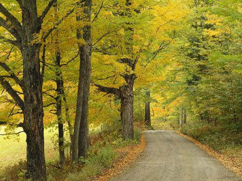 Country Road Passing by Autumn Trees, New England, USA Photographic Print