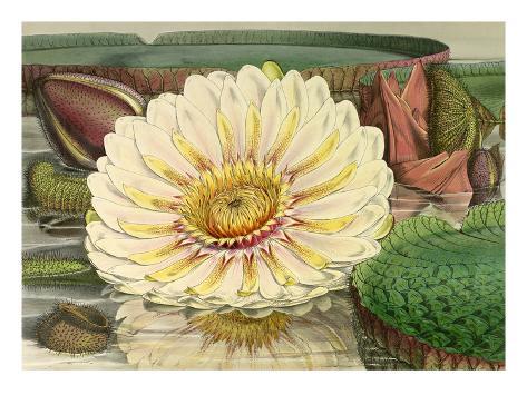 Plate III Giclee Print