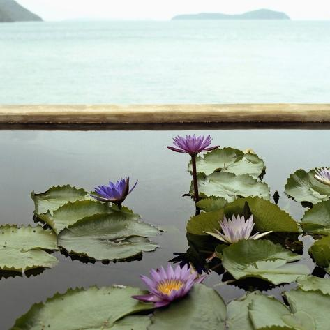 Water lilies in pond by ocean Photographic Print