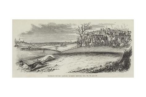 Waterloo Picture (Altcar) Coursing Meeting, 24, 25 and 26 November Giclee Print