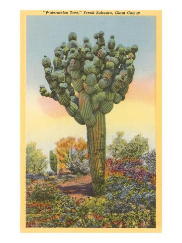 watermelon tree freak saguaro cactus prints allposters ca