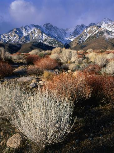 Mountains and Desert Flora in the Owens Valley, Inyo National Forest, California, USA Photographic Print