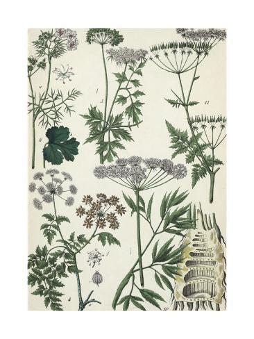 White Flowering Weeds Art Print