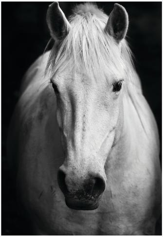 White horses black and white art portrait print