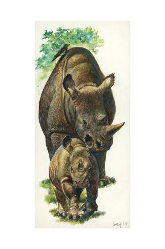 White Rhinoceros Ceratotherium Simum with a Young, Illustration Stretched Canvas Print