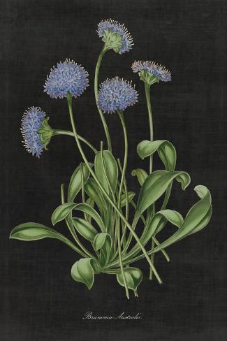 Botanical on Black Chart VII Art Print
