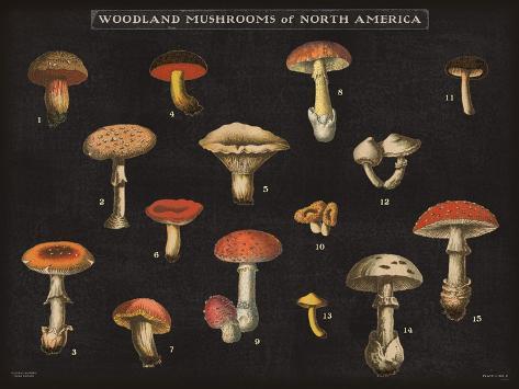Mushroom Chart I Taidevedos