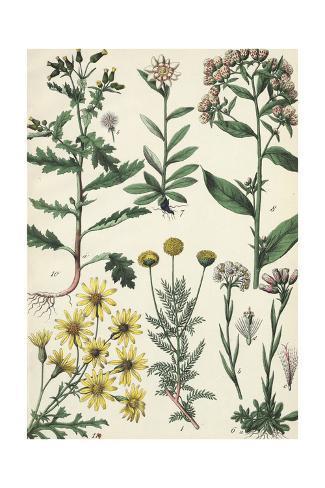 Wild Flowering Plants Art Print