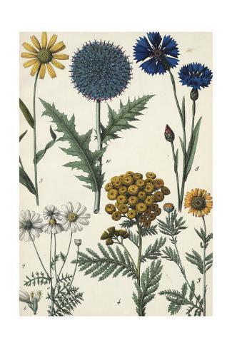 Wildflowers and Floral Weeds Art Print
