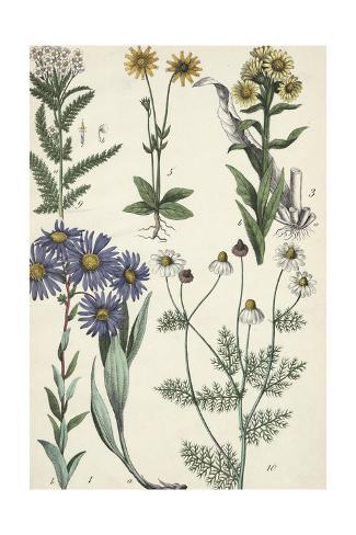 Wildflowers on Stems Art Print