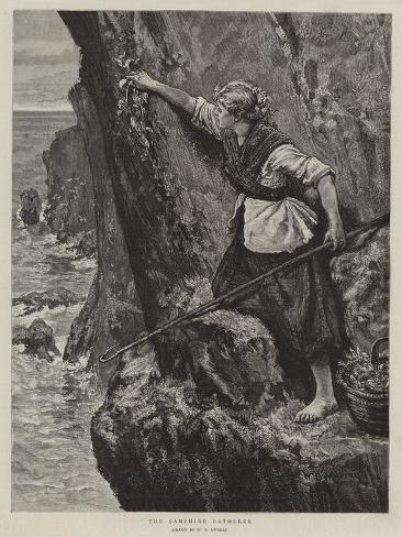 The Samphire Gatherer Giclee Print