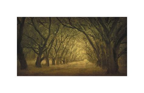 Evergreen, New Alley, Right Side Giclee Print