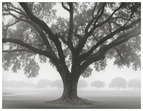 Silhouette Oak Art Print
