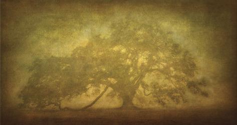 St. Joe Plantation Oak in Fog 3 Stretched Canvas Print