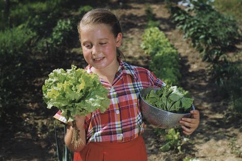 Girl Holding Head of Lettuce in Garden Valokuvavedos