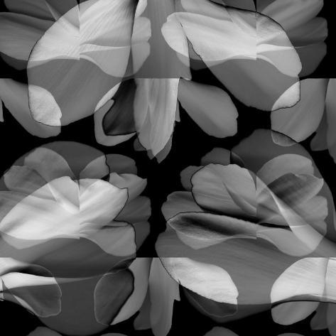 Floral Petals Upon Petals Photographic Print