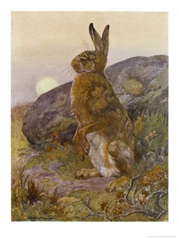 Lepus Europaeus a Hare Sits up on Its Back Legs Giclee Print