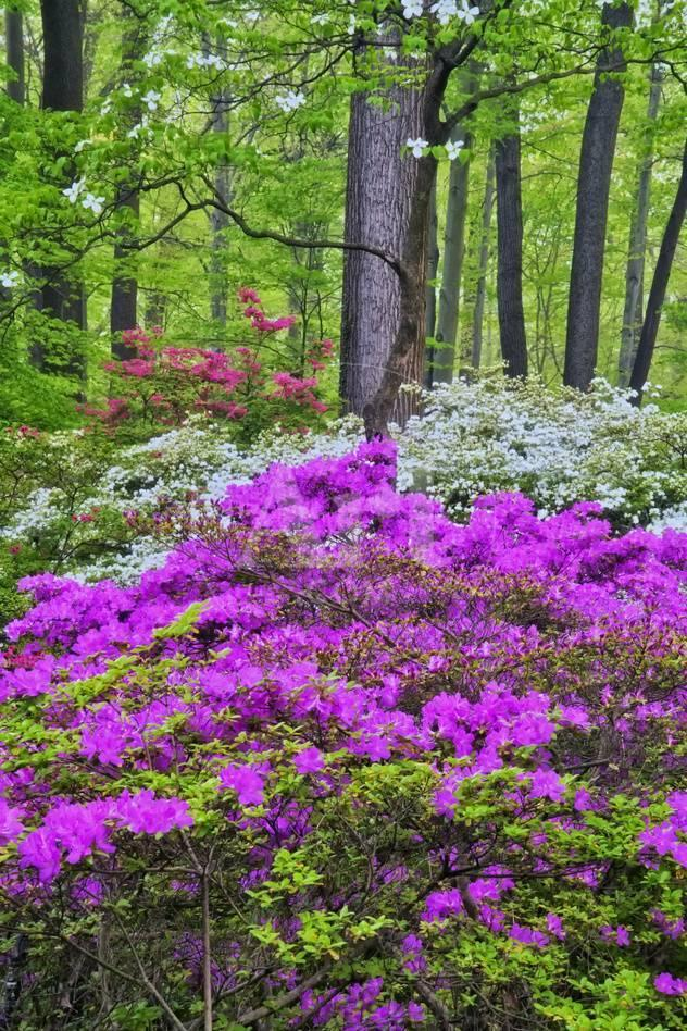 Winterthur Gardens, Delaware, USA Photographic Print at AllPosters.com