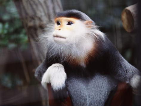 Monkey Photographic Print