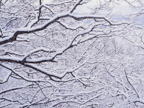 Snow on the Trees Photographic Print