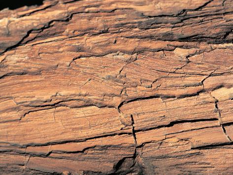 Wood Image Photographic Print
