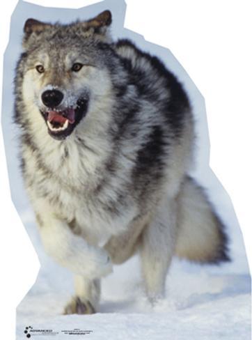 Wolf Lifesize Standup Cardboard Cutouts