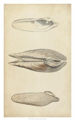 Marine Mollusk I Giclee Print