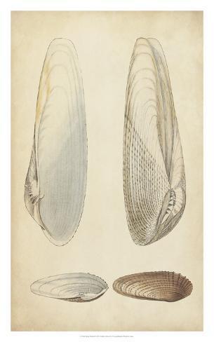 Marine Mollusk II Giclee Print