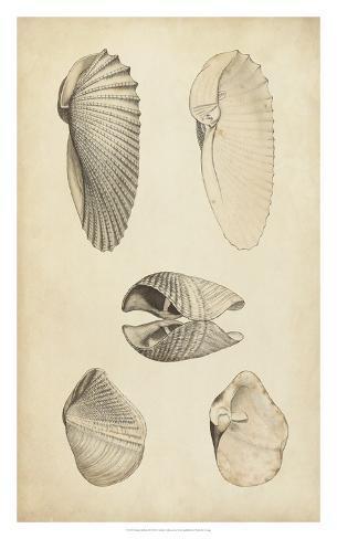 Marine Mollusk III Giclee Print