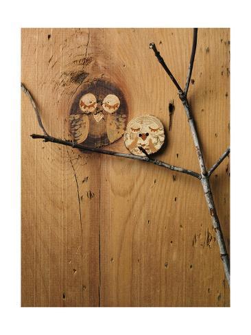 Wood Owl Knots Photo