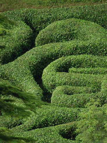 Glendurgan Maze, Cornwall, England, United Kingdom, Europe Photographic Print