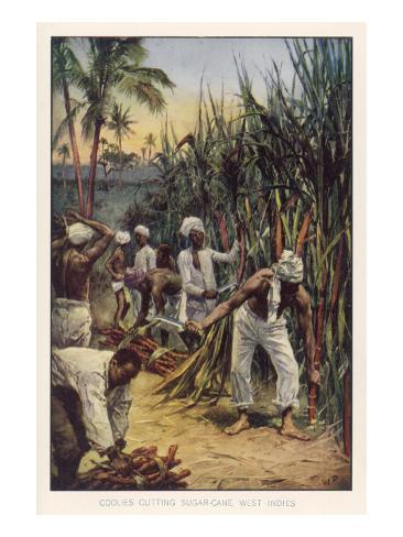 Workers in the West Indies Cut Sugar Cane Lámina giclée