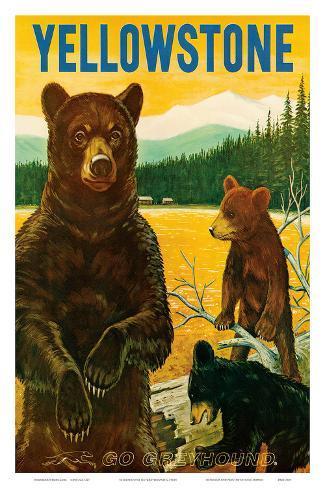 Yellowstone Go Greyhound c.1960s Art Print