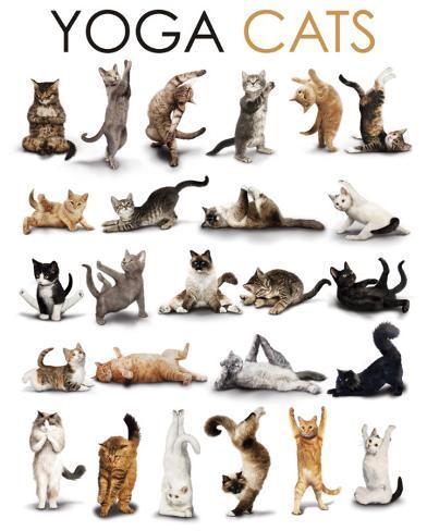 Yoga - Cats Miniposter