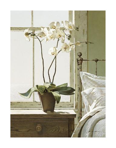 Bedside Orchid Art Print