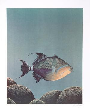 Trigger Fish by Richard Ellis