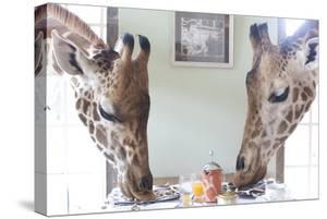 Two Giraffes Have Breakfast at Giraffe Manor in Nairobi, Kenya by Robin Moore