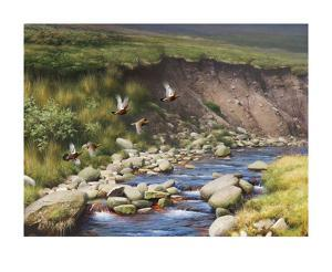 Grouse by a Moorland Stream by Rodger McPhail