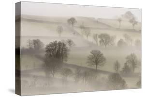 Morning mist, near Tavistock, Dartmoor NP, Devon, UK by Ross Hoddinott
