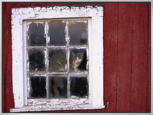 Cat sitting in a barn window by Scott Barrow