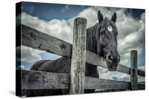 Old Black Horse by Stephen Arens
