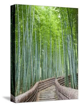 Japan, Kyoto, Arashiyama, Adashino Nembutsu-ji Temple, Bamboo Forest by Steve Vidler