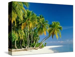 Palm Trees and Tropical Beach, Maldive Islands, Indian Ocean by Steve Vidler