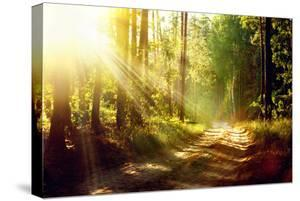 Beautiful Scene Misty Old Forest with Sun Rays, Shadows and Fog by Subbotina Anna