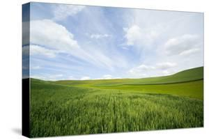 Green Fields of Spring Wheat by Terry Eggers