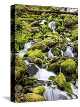 Lush Area with Small Creek, Olympic National Park, Washington, USA by Tom Norring
