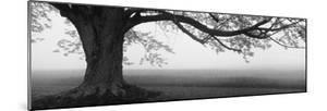 Tree in a Farm, Knox Farm State Park, East Aurora, New York State, USA